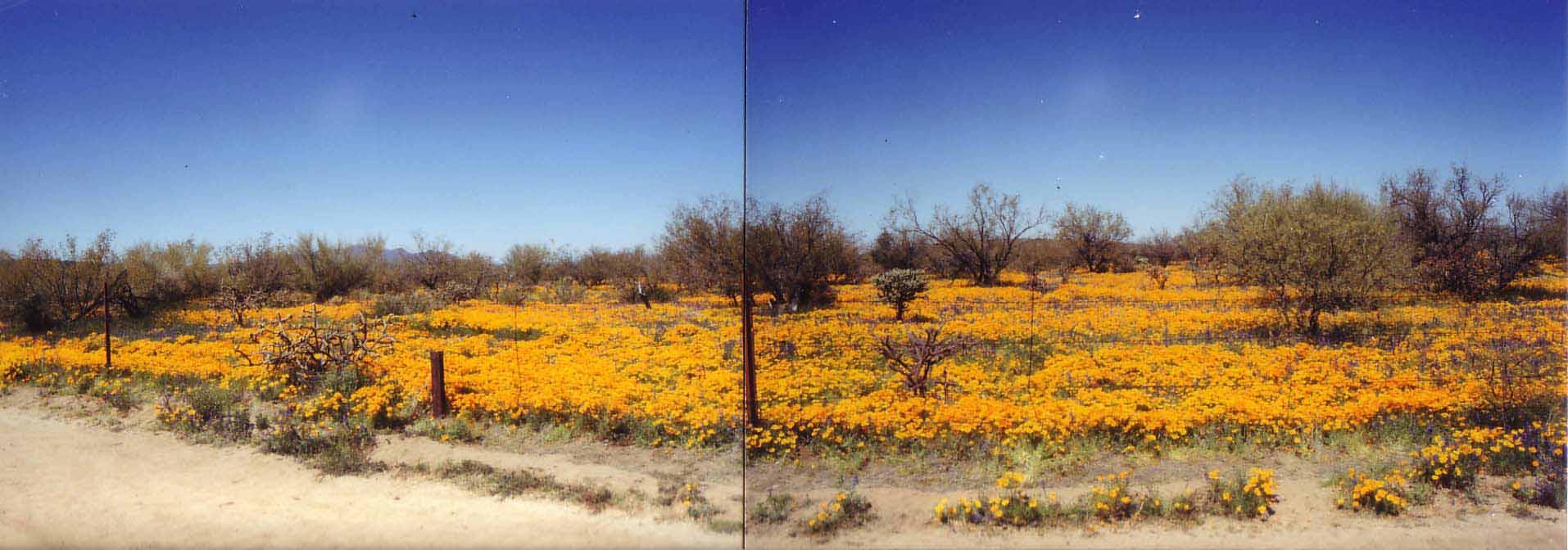 アリゾナの花-2.jpg